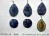 albicocco-ciliegio-062